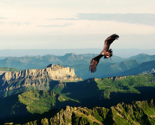 the sustainability revolution will be lead by eagles.